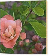 Color 133 Wood Print