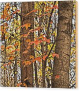 Color And Trees Lan 225 Wood Print
