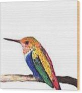 Color Birds Study  4 Wood Print