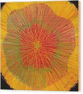 Color Burst 4 Wood Print