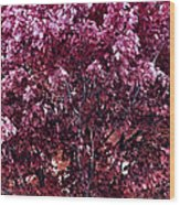 Color In The Tree 01 Wood Print