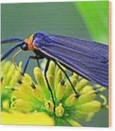 Color Me Blue Wood Print