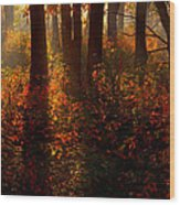 Color On The Forest Floor Wood Print