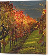 Color On The Vine Wood Print by Bill Gallagher