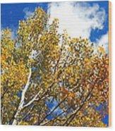 Colorado Aspens And Blue Skies Wood Print