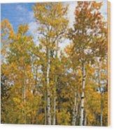 Colorado Autumn Aspens  Wood Print