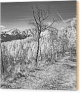 Colorado Backcountry Autumn View Bw Wood Print by James BO  Insogna