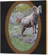 Colorado Bighorn Wood Print