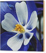 Colorado Columbine Wood Print