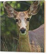 Colorado Deer Wood Print