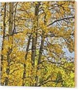 Colorado Fall Aspens 2 Wood Print