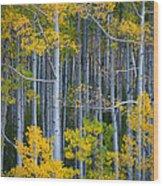 Colorado Fall Color Wood Print