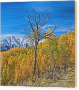 Colorado Fall Foliage Back Country View Wood Print