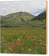 Colorado Meadow And Mountain Landscape Wood Print