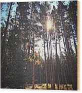 Colorado Pines Wood Print