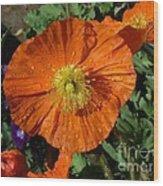 Colorado Poppy Wood Print