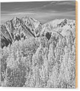 Colorado Rocky Mountain Autumn Beauty Bw Wood Print
