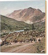 Colorado Roundup 1897 Wood Print
