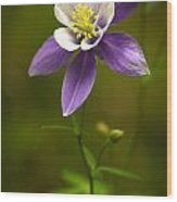 Colorado State Flower Wood Print
