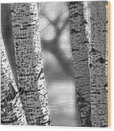 Colorado White Birch Trees In Black And White Wood Print