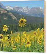 Colorado Wildflowers Wood Print