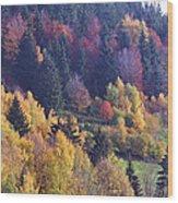 Colored Landscape Wood Print