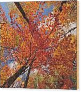 Colored Leaves Ground To Sky Wood Print
