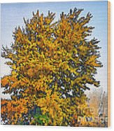 Colored Leaves On The Autumn Forest Wood Print