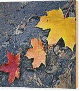 Colored Maple Leaf On Stone Wood Print