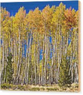Colorful Aspen Panorama Wood Print
