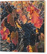 Colorful Autumn Grapes Wood Print