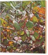 Colorful Beach Sea Grapes Wood Print