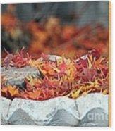 Colorful Bird Bath Wood Print