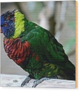 Colorful Bird  Wood Print