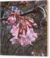 Colorful Blooming Wood Print