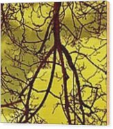 Colorful Branches Wood Print by Michael Sokalski
