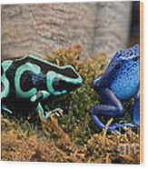 Colorful But Deadly Poison Dart Frogs Wood Print