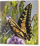 Colorful Butterfly Square Wood Print