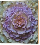 Colorful Cabbage Wood Print