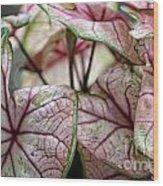 Colorful Coleous Wood Print