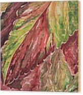 Colorful Coleus Wood Print