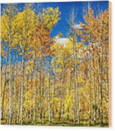 Colorful Colorado Autumn Aspen Trees Wood Print