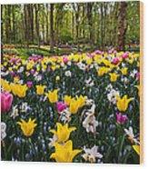 Colorful Corner Of The Keukenhof Garden 1. Tulips Display. Netherlands Wood Print