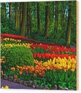 Colorful Corner Of The Keukenhof Garden 4. Tulips Display. Netherlands Wood Print