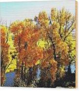 Colorful Cottonwoods Wood Print