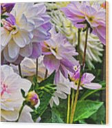 Colorful Dahlia Garden Wood Print
