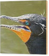 Colorful Double-crested Cormorant Wood Print