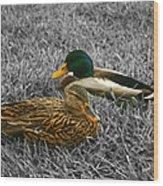Colorful Ducks Wood Print