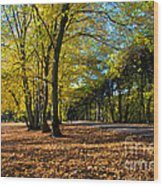 Colorful Fall Autumn Park Wood Print