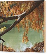 Colorful Fall Bald Cypress Wood Print